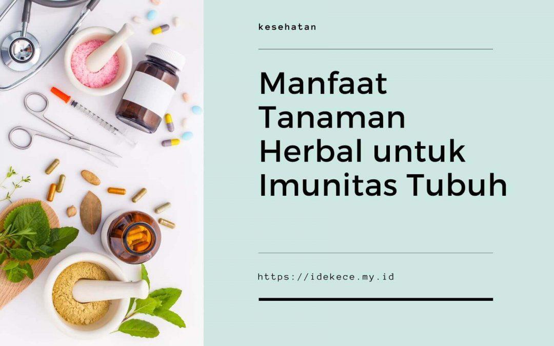 Manfaat Tanaman Herbal untuk Imunitas Tubuh